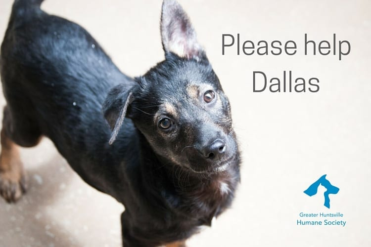 Please helpDallas
